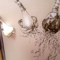 Narcissus poeticus bulbs - ink drawing