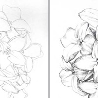 How to draw a cluster of flowers - step by step