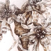 Winter blooms - Hammamelis mollis