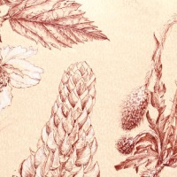 Botanical journaling - Plate 3/may 2020
