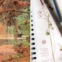 Botanical Journaling Workshop