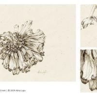 Botanical Portraits