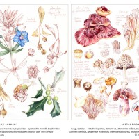 Botanical Journaling