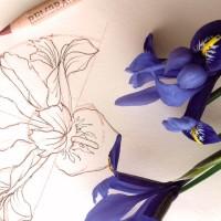 Three Designs inspired by the Iris Flower