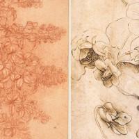 How to Draw Flowers like Leonardo da Vinci