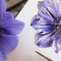 Sketching a Blue Anemone with Ink and Watercolor