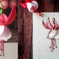 Daily Sketches - June 30 Flowers - 1. Fuchsia