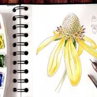 Botanical Journal - Sketching a coneflower